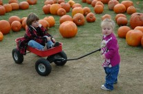 Enjoy Pumpkin Picking at the farm